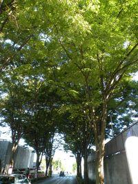 Tosyokan_Green