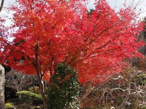 Sakurayama_Shiromine1