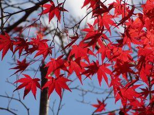 Sakurayama_Shiromine3