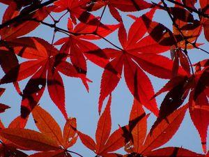 Heirinji2015_1