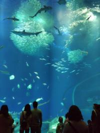 Aqua_world1