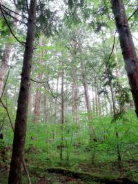Akazawa_Shizen_Kyuuyourin1